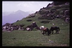 Tibet2-14