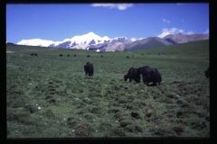 Tibet-115