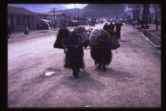 Tibet-154