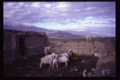 Tibet2-114