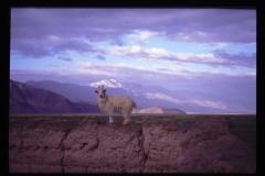 Tibet2-115